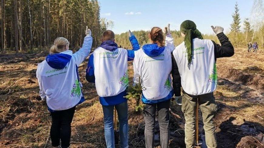 Акцию «Сад памяти» встретили горняки Кузбасса – угольного «сердца» России