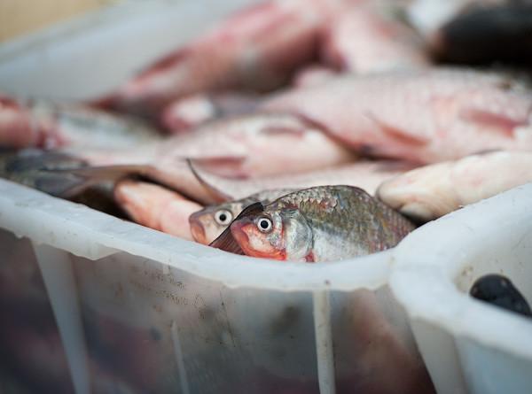Китай приостановил импорт морепродуктов двух российских компаний из-за COVID-19