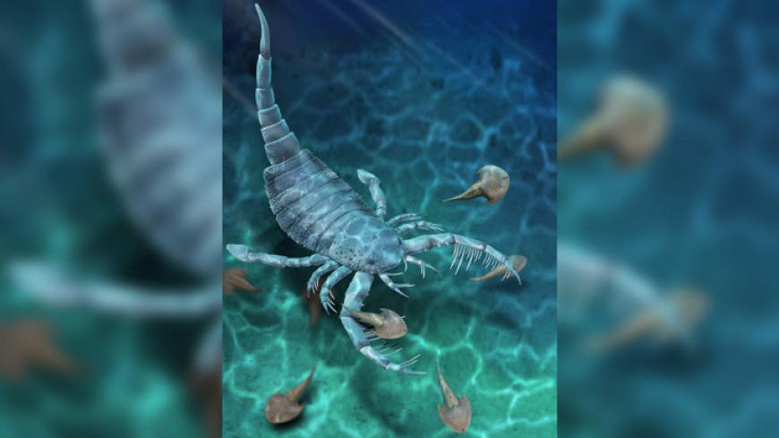 В Китае нашли древнейшего ракоскорпиона