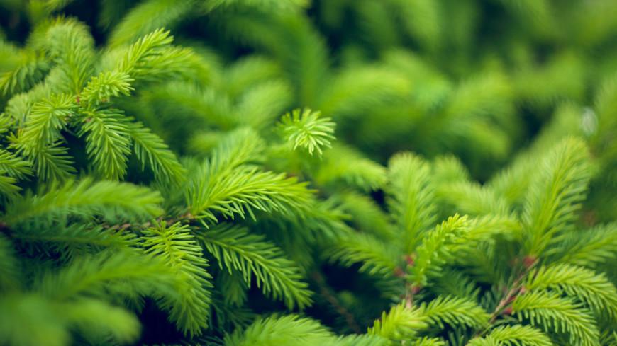 Больше кислорода: Третьяковская галерея посадила еловый лес во Владимирской области