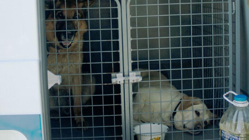 Около 150 собак отравились кормом в подмосковном приюте