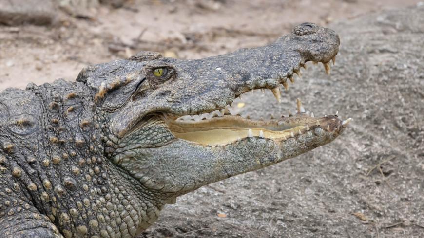 Внутри аллигатора нашли пропавшего во время урагана «Ида» мужчину
