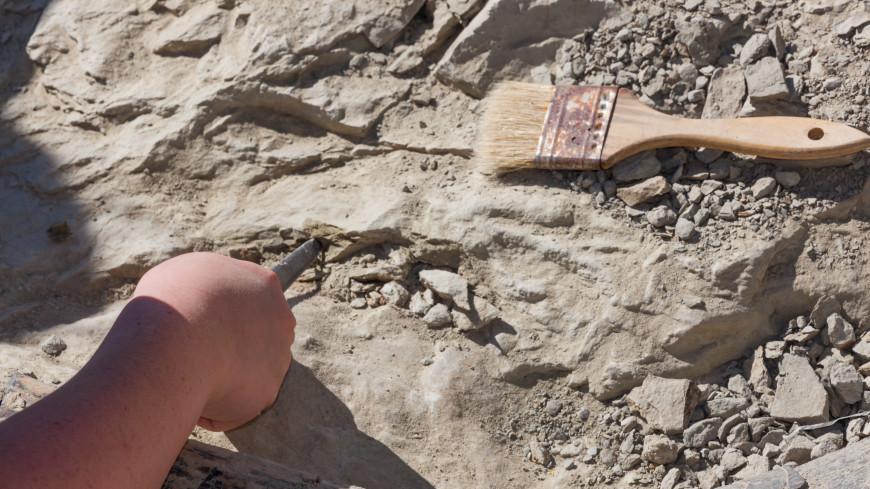 Скелеты двух ихтиозавров неизвестного вида обнаружили палеонтологи под Ульяновском