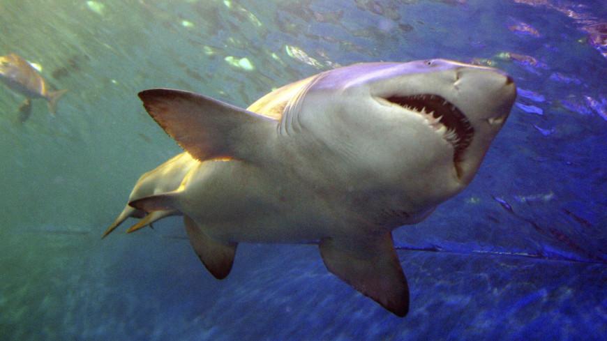 Акула откусила руку мужчине в Египте