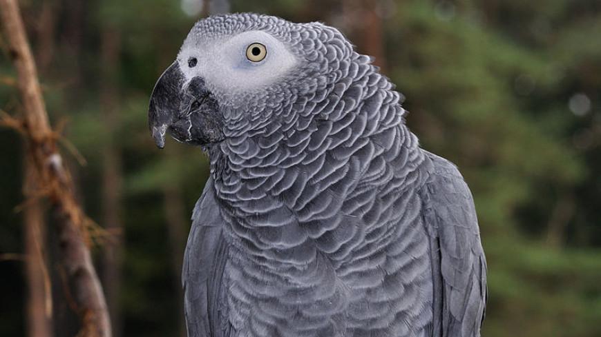 Попугай стал ключевым свидетелем в деле об убийстве в Аргентине