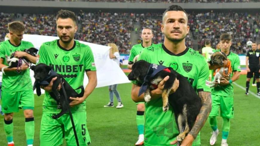 Акция помощи собакам из приюта: румынские футболисты вышли на поле с щенками в руках