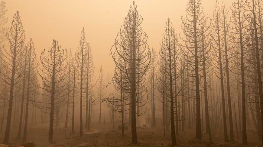 Дым от лесных пожаров оказался причиной смерти более 33 000 человек в год