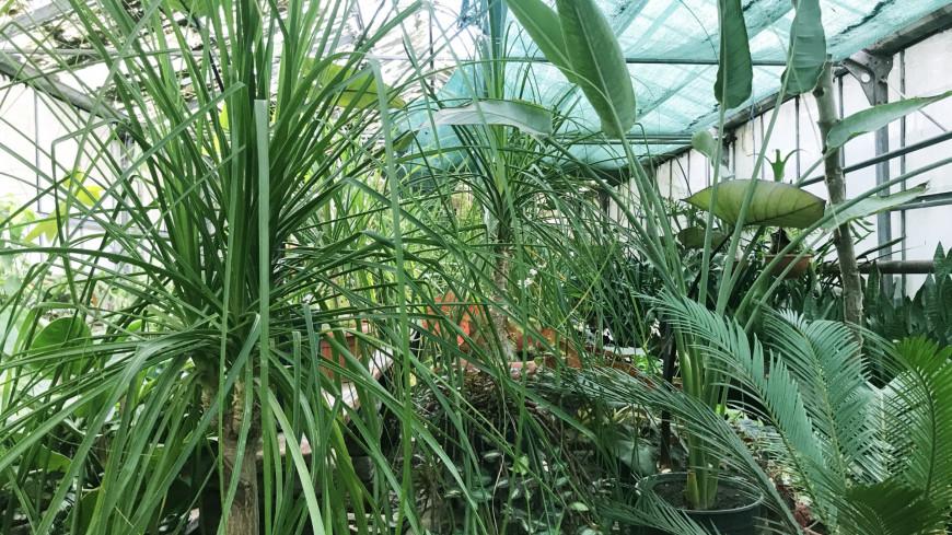 Ученые нашли зачатки интеллекта у растений