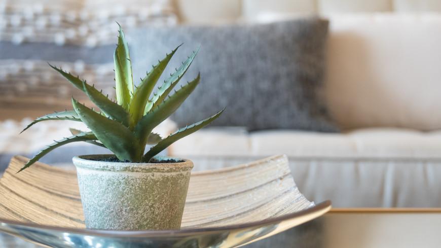 «Алоэ – в спальне, фикус – в гостиной»: эксперты назвали самые полезные для здоровья комнатные растения