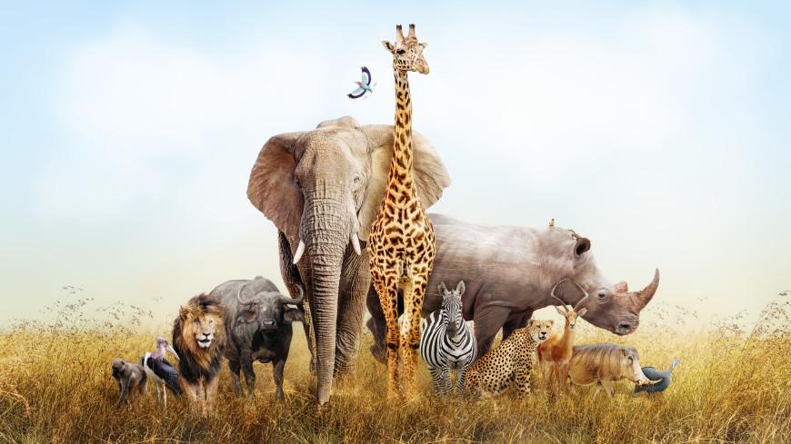 Тест: сможете ли вы угадать животное по фото?