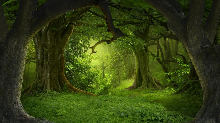 Экологи воссоздали облик одного из первых лесов Земли