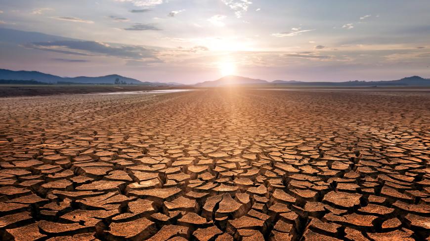 Ученые: засуха может вызвать острый дефицит кофе и сахара