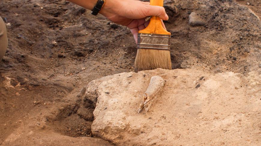 В Австралии нашли кости древнего орла, охотившегося на коал