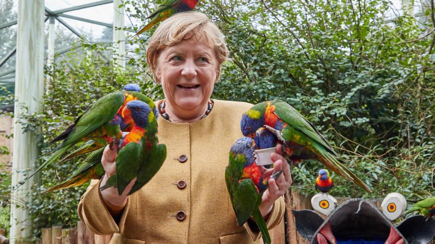 В птичьем парке на Меркель напал попугай