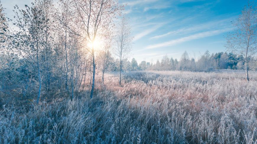 Жителей Подмосковья предупредили о заморозках с четверга по субботу
