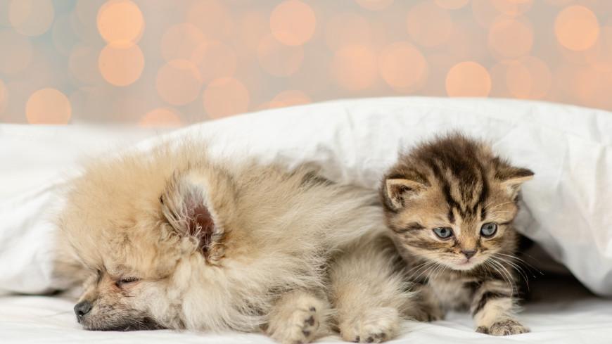 Названы условия, необходимые для мирного проживания собаки и кошки