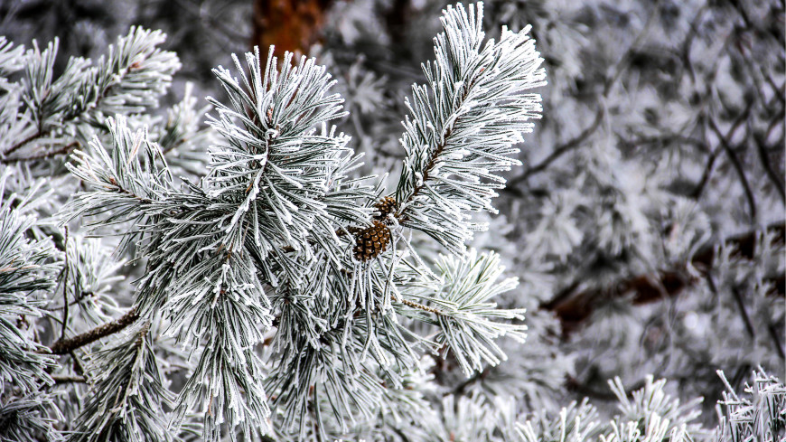 На Чукотке отменили занятия в школах из-за снежного циклона