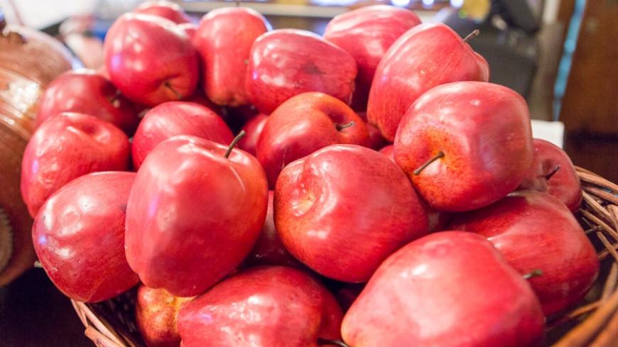 Фруктовый сезон: в Беларуси собирают урожай яблок