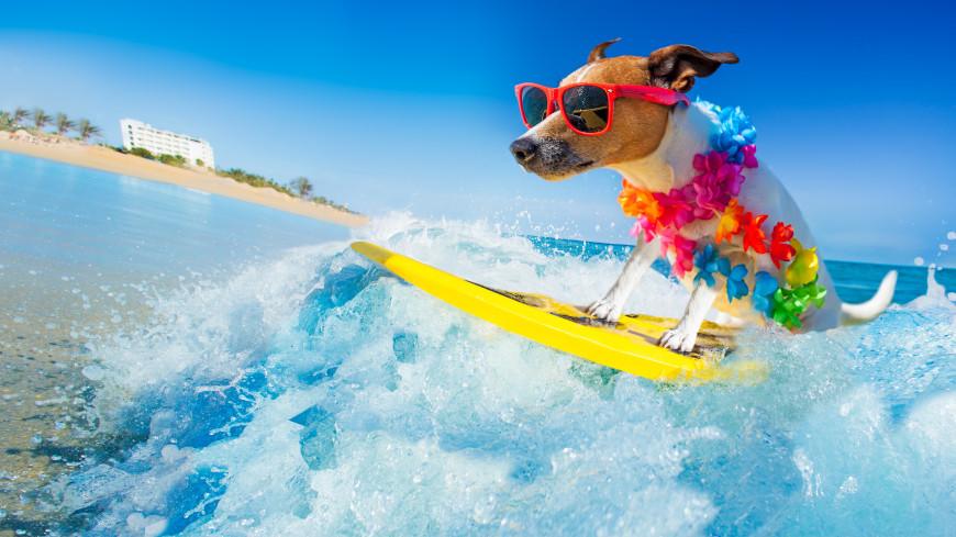 Спортдайджест: в США соревновались собаки-серфингисты, из сборной Кубы по бейсболу дезертировали семь игроков, юная футболистка поразила мировые бренды